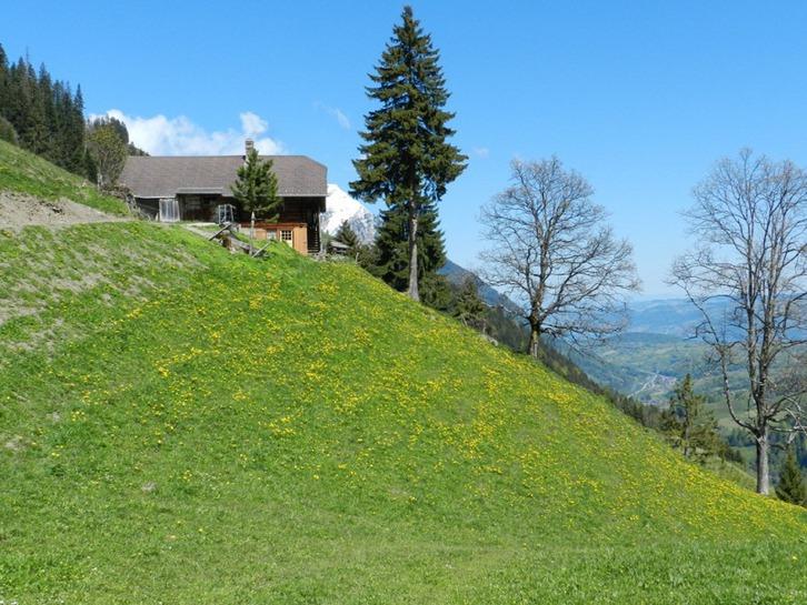 Berghütte im Berner Oberland Kiental, nahe Skilift 1400 müM. 3723 Kiental Kanton:be Immobilien