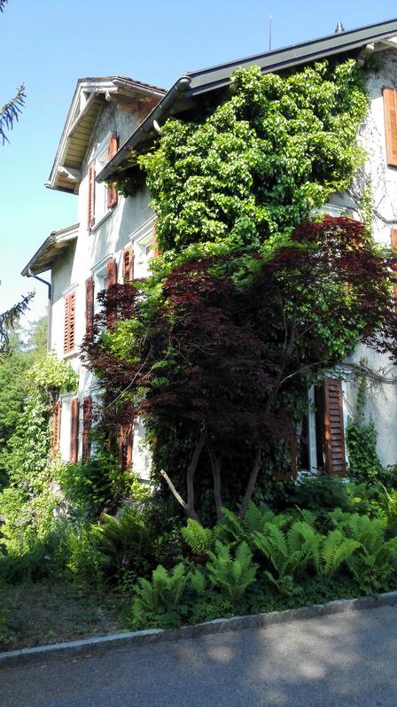 Charmante 3 Zimmer-Wohnung in zentraler u. ruhiger Lage  9010 St. Gallen Kanton:sg Immobilien 2