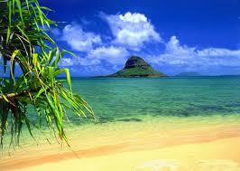 Biologisches Pflegeöl mit Kukuinussöl direkt aus Hawaii Sonstige 4