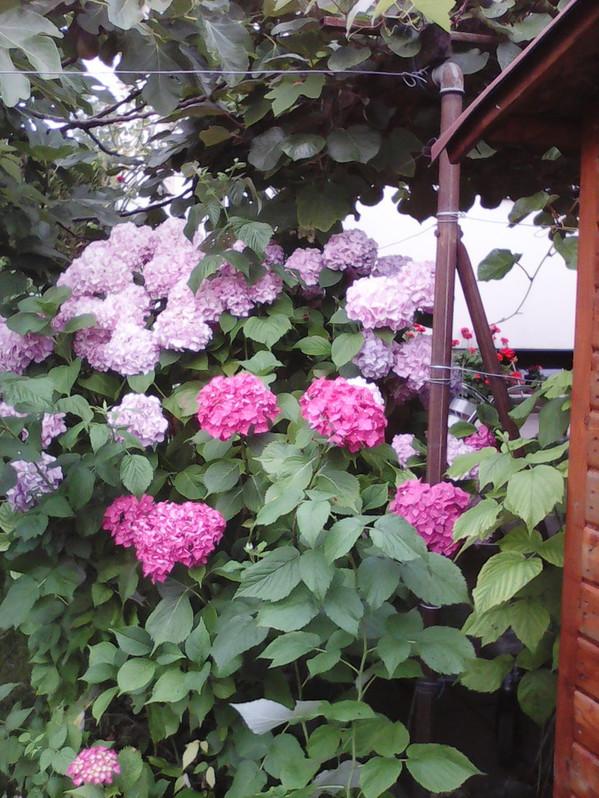 Voulez-vous perfectionner votre jardin? Elagage des haies, tondre le gazon, petit motifs floraux,nettoyage et elimination des mauvaises herbes,peinture des clôtures et beaucoup plus...  Garten & Handwerk