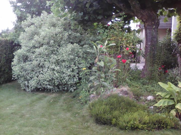 Voulez-vous perfectionner votre jardin? Elagage des haies, tondre le gazon, petit motifs floraux,nettoyage et elimination des mauvaises herbes,peinture des clôtures et beaucoup plus...  Garten & Handwerk 3