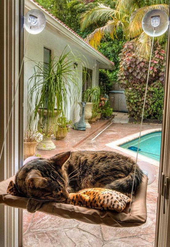 Katzen Schlafplatz Liege Katzenliege Fensterliege Katzensitz Sunny Seat Katze Bett Liege TV Hit NEU Haushalt 2