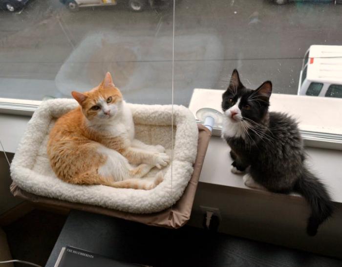 Katzen Schlafplatz Liege Katzenliege Fensterliege Katzensitz Sunny Seat Katze Bett Liege TV Hit NEU Haushalt 3