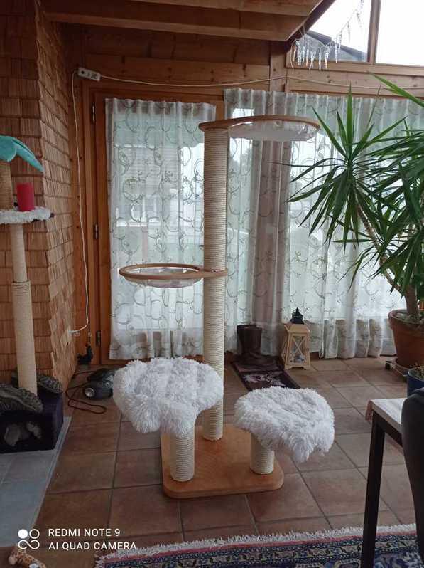 Katzenbaum Tiere