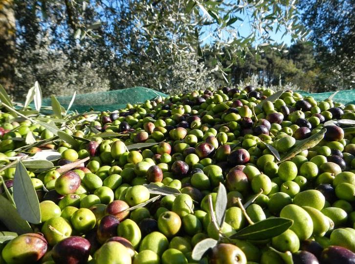 Vendesi olio extravergine di oliva Sonstige
